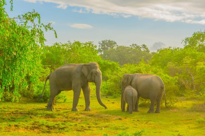 Kumana National Park Safari